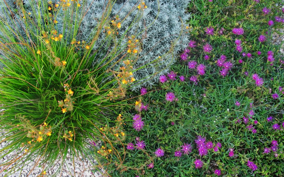 Alternative garden design – the dry garden