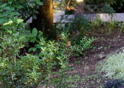 Giardino nel bosco, dettagli