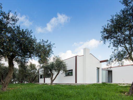 House among olive trees